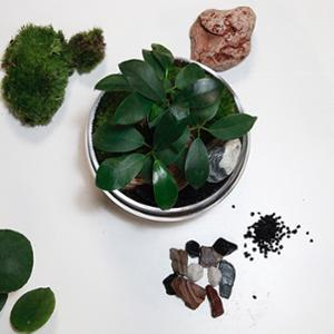 GREEN FACTORY - JURASSIC LAB