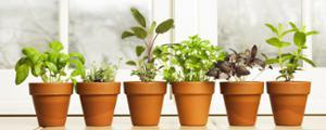 88 MENILMONTANT : GRANDE VENTE DE PLANTES w/ LE GOUT DES PLANTES